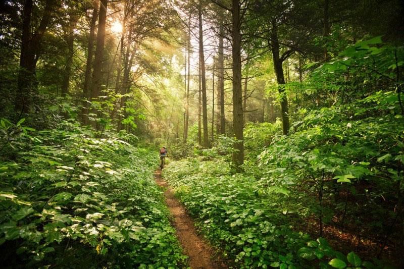 pisgah-trail-e1361909328957